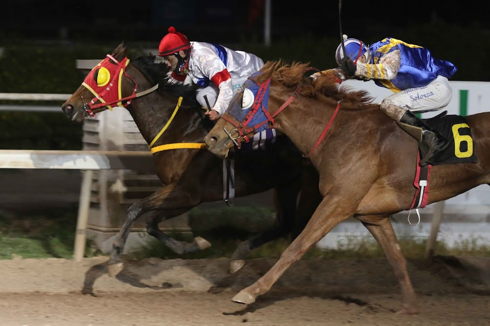 Elsa (Dance Brightly) se adjudica Handicap (1000m-Arena-CHS). - Staff ElTurf.com