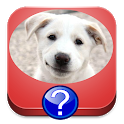 Dog Breeds Quiz icon