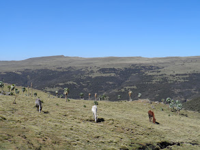 Photo: Trekking down from Imetgogo, Simien Mountains National Park