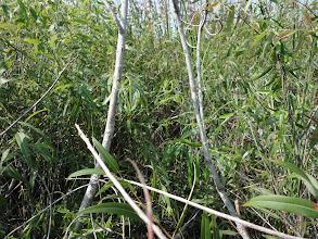 Photo: Thick vegetation.