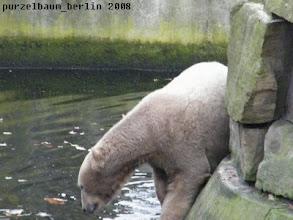 Photo: Kurz wird der Wassergraben inspiziert...