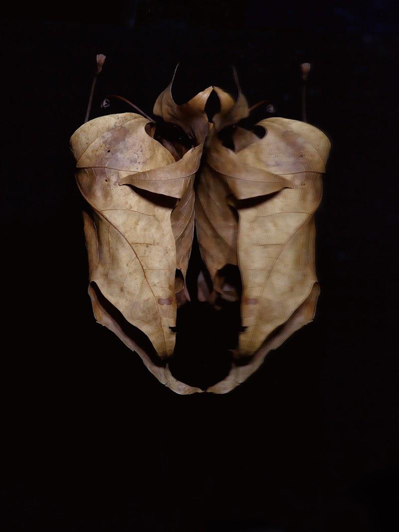 Maschera vegetale di Cho