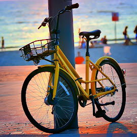 telaviv by Catalino Adolfo   Jr. - Transportation Bicycles ( bicycle, transportation )