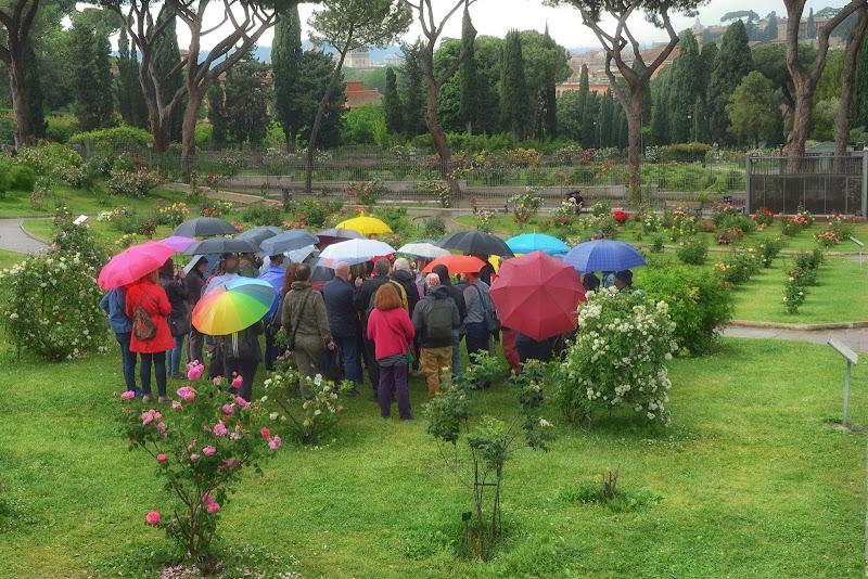 Maggio, le rose e gli ombrelli di GVatterioni
