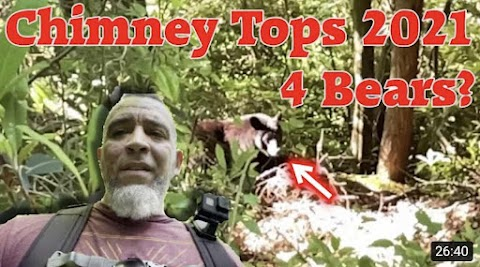Chimney Tops June 2021 - Is the Trail Open?  Encounter with 4 Bears?