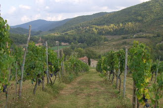 Photo: The vineyard behind our villa in Chianti, Italy