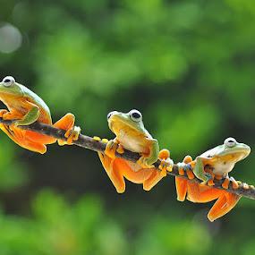 3 Frog by Ian Bismarkia - Animals Other