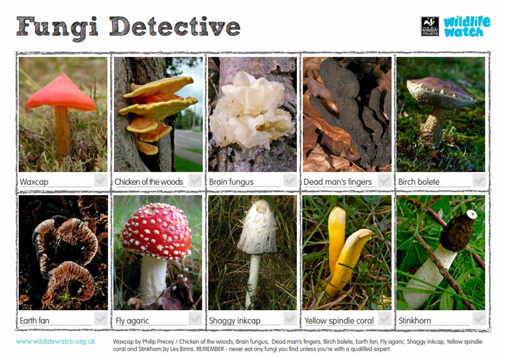 Fungi detective