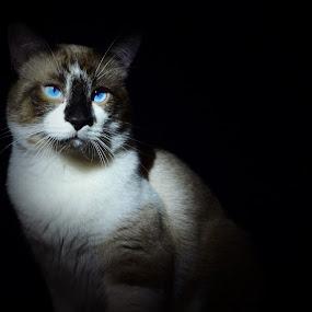 by Sean Valdez - Animals - Cats Portraits