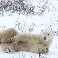 L'orso di