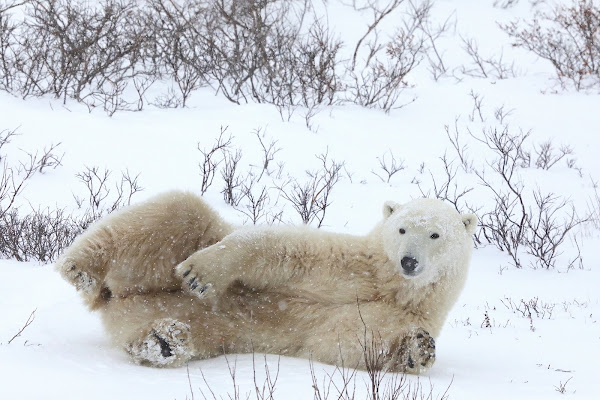 L'orso di eddieyankee