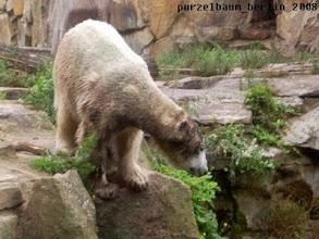 Photo: Pruefender Blick in den Wassergraben ;-)