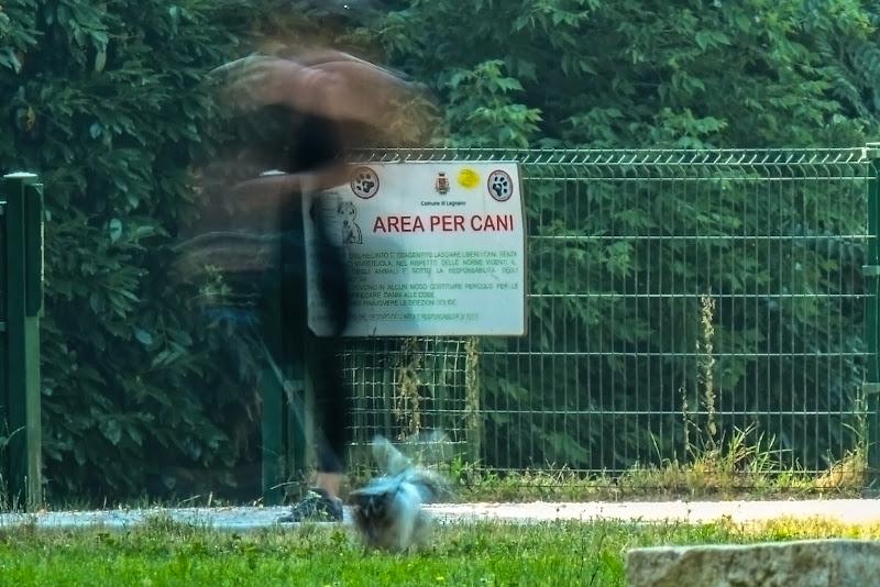 Area per cani di acquario