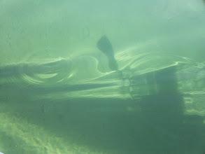 Photo: Árnyék a tengerfenéken.