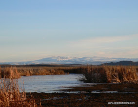 Photo: Steens Mountain from the frozen mouth of the Blitzen River