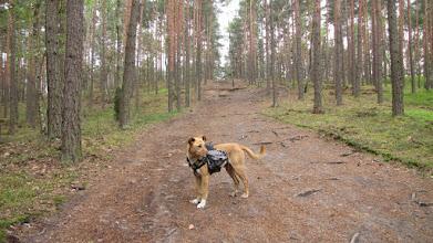 Photo: Kampinoski Park Narodowy