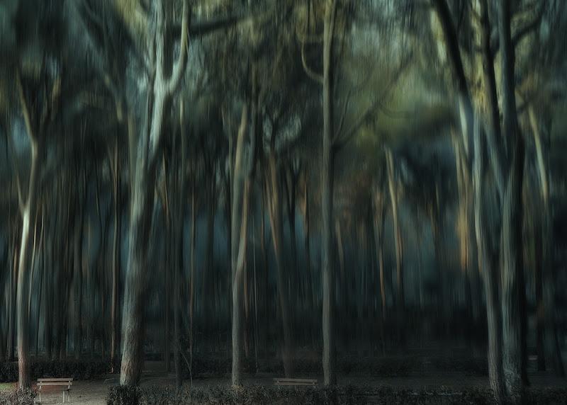 Bosco dei Puffi di nadia-ciube-borghi