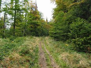 Photo: 18.Graniczny szlak w kierunku Mędralowej (nota bene jest to Główny Szlak Beskidzki). Jeden z nielicznych szlaków na mojej drodze, którego (jeszcze?) nie rozjechali leśnicy. Może nie mogą, bo to pas graniczny?