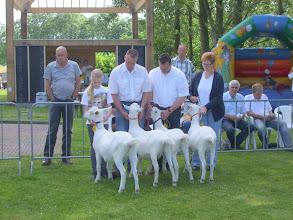 Photo: Rubriek 5: witte lammeren geboren in januari 2012.  1a. Nooro's Corrie 18, 1b. Nooro's Femke 39, 1c. Lieke van de Dijk, 1d. Nooro's Femke 40.