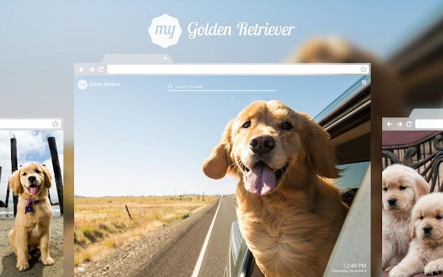 My Golden Retriever Cute Dog Puppy Wallpapers