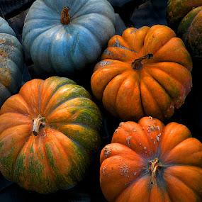 Pumpkins of Color by Gary Pope - Nature Up Close Gardens & Produce ( orange, blue, pumpkin, pumpkins, halloween )