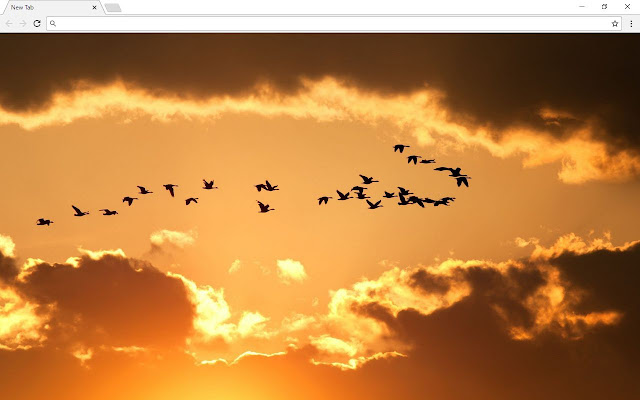 Nature New Tab Page