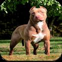 Pitbull Dog Wallpaper HD icon