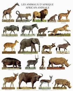 Animals of Africa - náhled