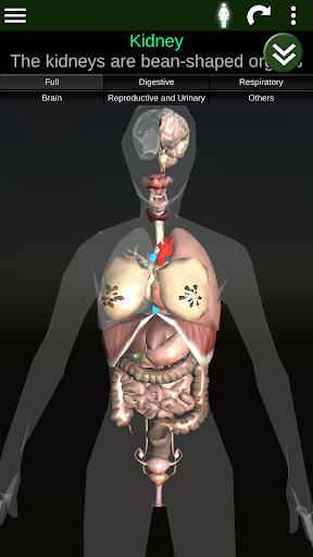 Internal Organs in 3D (Anatomy) Screenshot