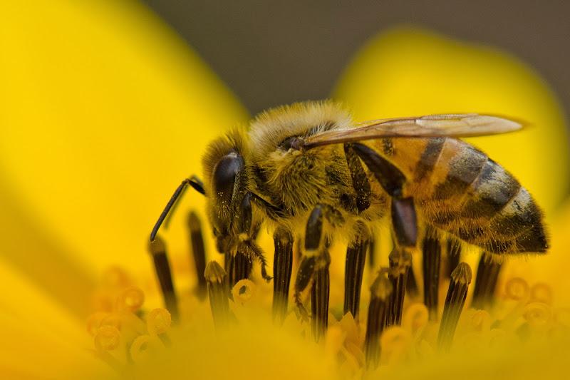 l'ape di homer1108