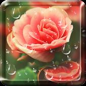 Rose Droplets Live Wallpaper