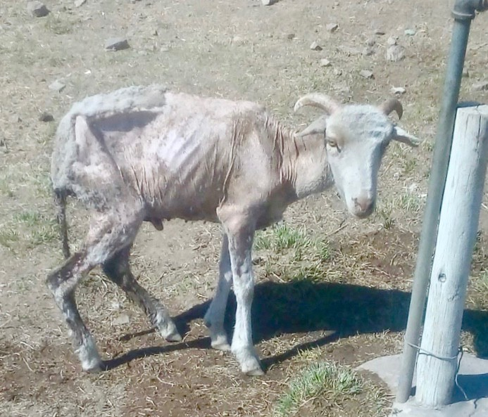 Five villages without tap water for three months, livestock dying - SowetanLIVE