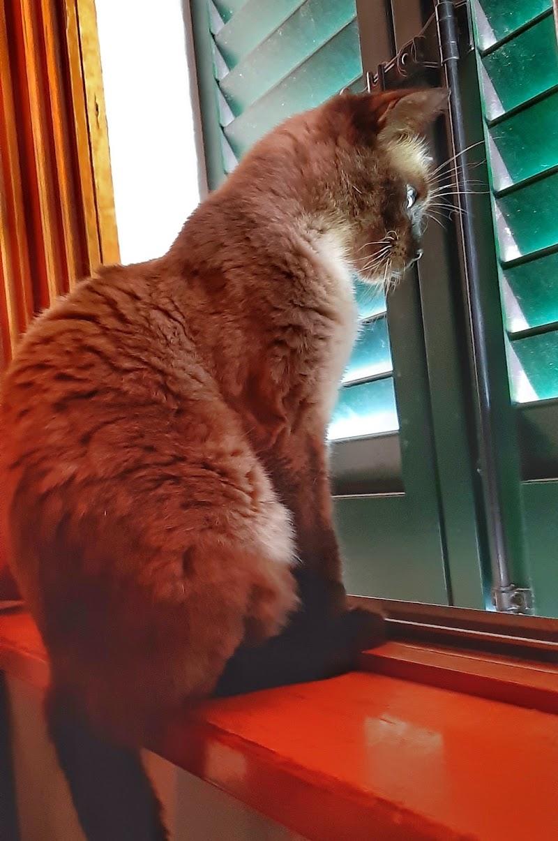Profilo di gatta  di adriana_noci