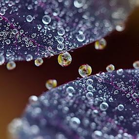 by Kseniya Maksimenko - Nature Up Close Water ( drops )