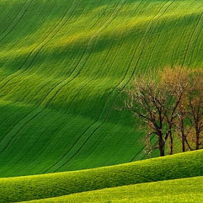 In waves by Jozef Micic - Landscapes Prairies, Meadows & Fields ( field, tree, grass, waves, green )