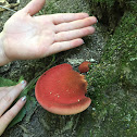 Beefsteak Fungus