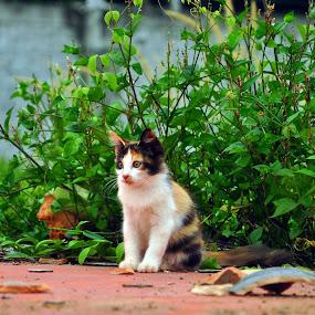 meet Cleverly by Nydzam Ahmad - Animals - Cats Portraits