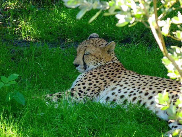 Brevard Zoo African Animals