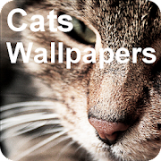 Fancy Cats Wallpapers incl. free editor
