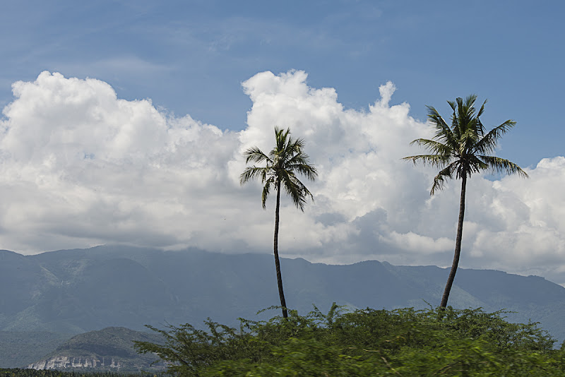 Palm trees di Olaf