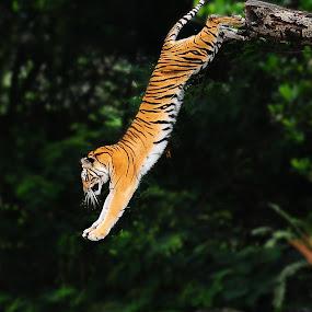 by Jeffry Sabara - Animals Other Mammals