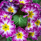 FLOWER-2016 PURPLE WREATH.jpg