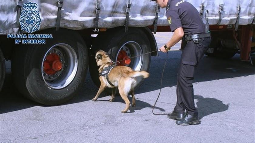 Perros de la unidad canina de la Policía inspeccionan un camión en busca de menores extranjeros no acompañados.