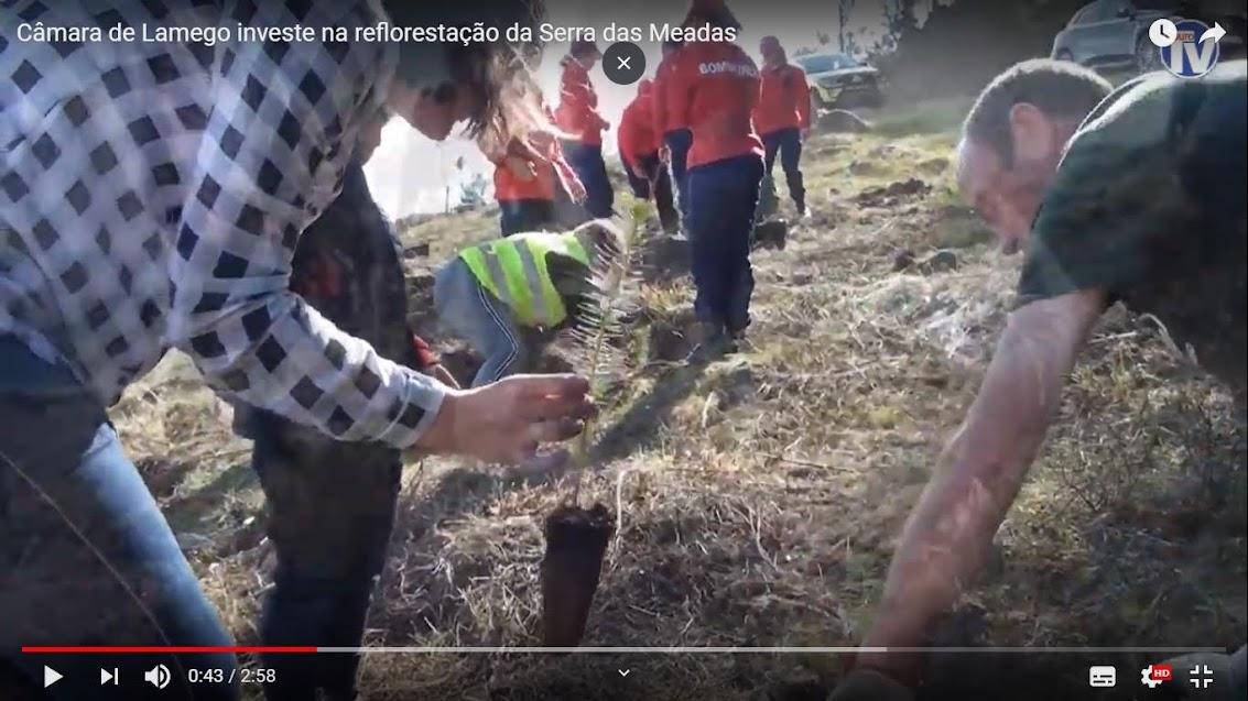 Vídeo - Câmara de Lamego investe na reflorestação da Serra das Meadas