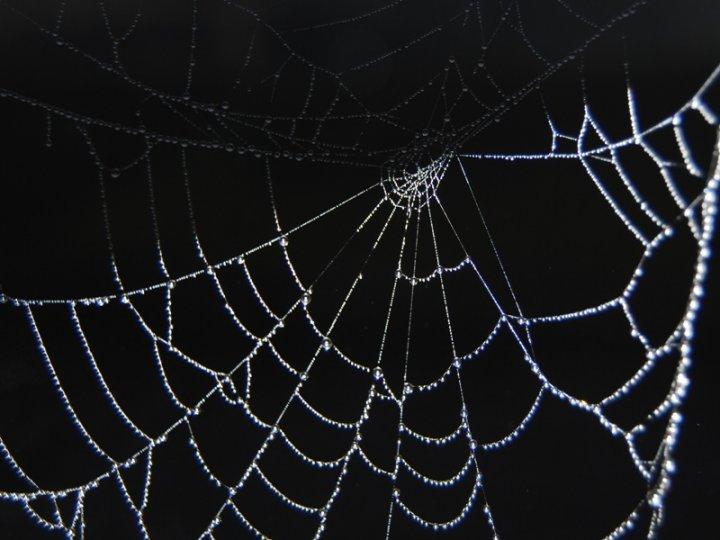 La dura vita del ragno..... di albertolecchi