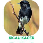 Master Kicau Kacer Juara Gacor