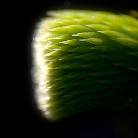 Fir tree by Mark Denham - Artistic Objects Other Objects ( macro, nature, green, fir tree )