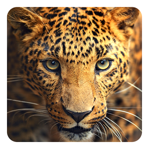 Wild Animal Wallpapers On Google Play Reviews Stats