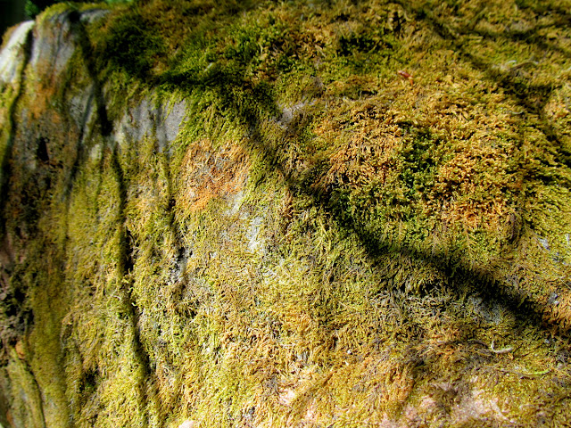 Moss and shadows