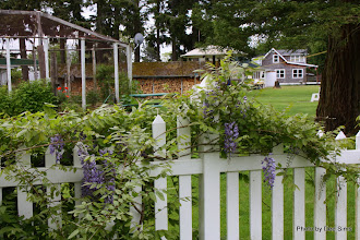 Photo: (Year 2) Day 345 - A House and Garden at the Ferry on Puget Island #2